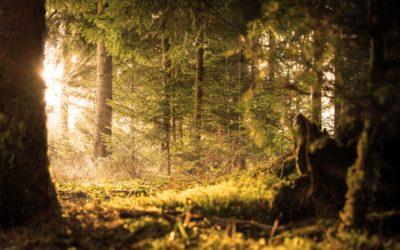 Green Forest Fund: Hier entstehen die Urwälder von morgen