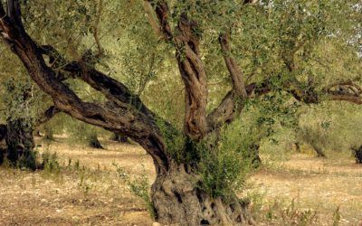 Erzählung: Der unnütze Baum